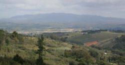 Olive Farm on Hawekwa Mountain – 23 ha
